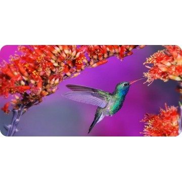 Blue Hummingbird With Flowers Photo License Plate