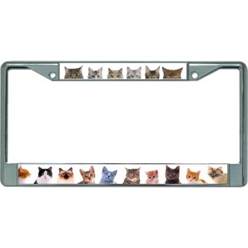 Adorable Cats And Kittens Chrome License Plate Frame