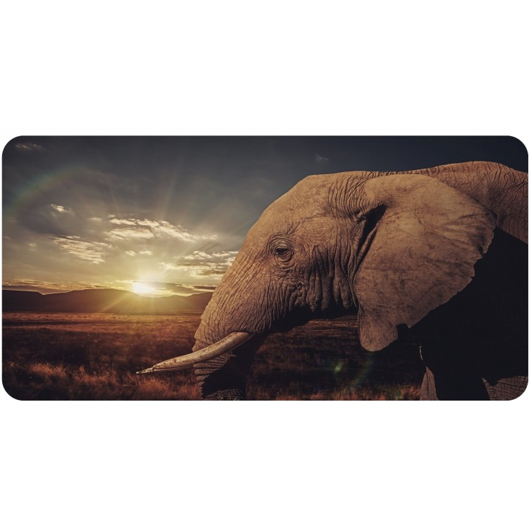 Elephant With Sunset Photo License Plate