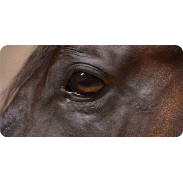 Brown Horse Eye View Photo License Plate