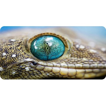 Lizard Eye View Photo License Plate
