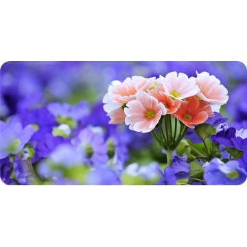 Bavaria Flowers Photo License Plate