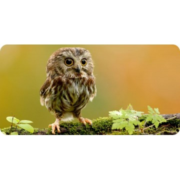 Baby Owl Photo License Plate