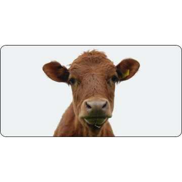 Brown Cow Photo License Plate