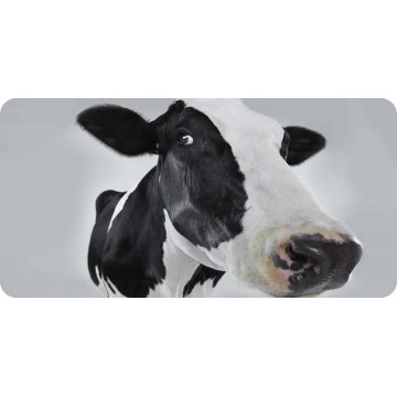 Black And White Cow #2 Photo License Plate