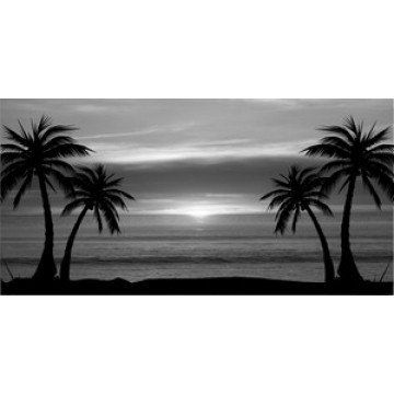 Grey Palm Tree Sunset Photo License Plate