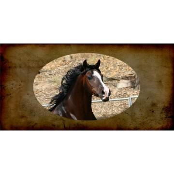 Arabian Horse Photo License Plate