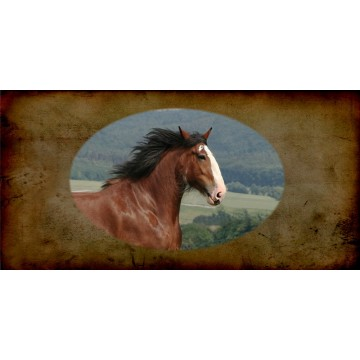 Clydesdale Horse Photo License Plate