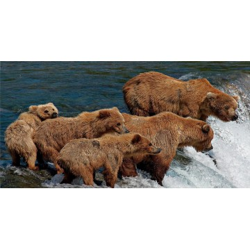 Bear Family At Waterfalls Photo License Plate