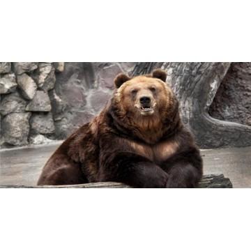 Bear Resting On Log Photo License Plate