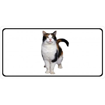 Calico Cat Photo License Plate