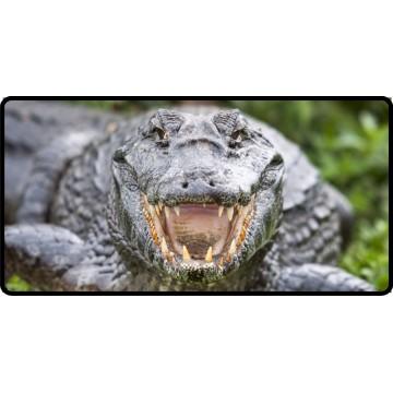 Alligator Close Up Photo License Plate