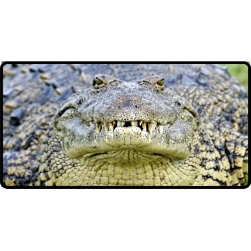 Crocodile Close Up Photo License Plate