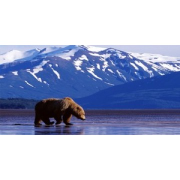 Brown Bear Photo License Plate