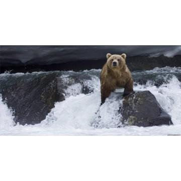 Brown Bear #2 Photo License Plate