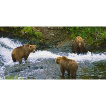Brown Bear #3 Photo License Plate