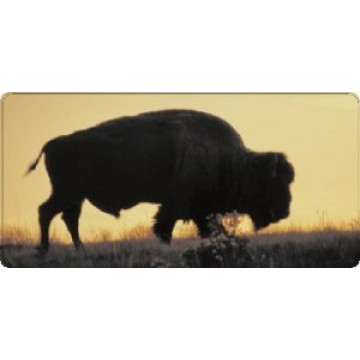 Bison (Buffalo) at Sunset Photo License Plate