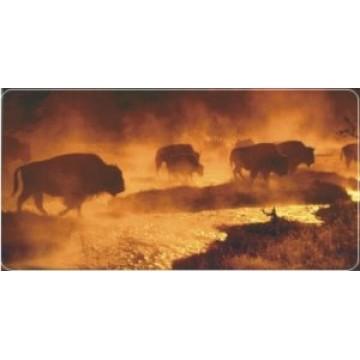 Bison / Buffalo Photo License Plate