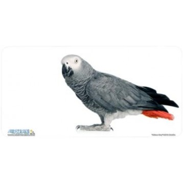 African Grey Parrot Airbrush License Plate