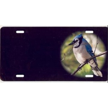Blue Jay Offset Airbrush License Plate