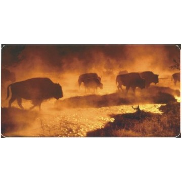 Bison / Buffalo Photo License Plate