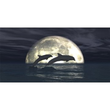 Dolphins In Moon Light Photo License Plate
