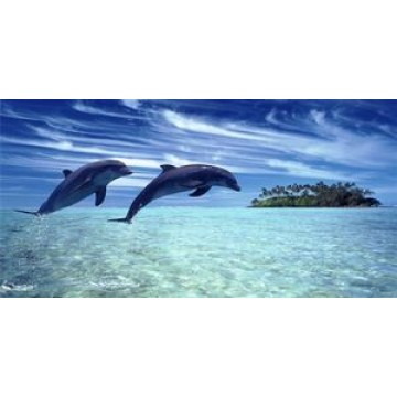 Dolphins Jumping Photo License Plate