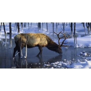 Elk Drinking In Stream Metal License Plate