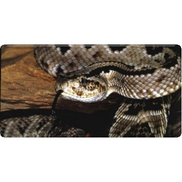 Rattlesnake Photo License Plate